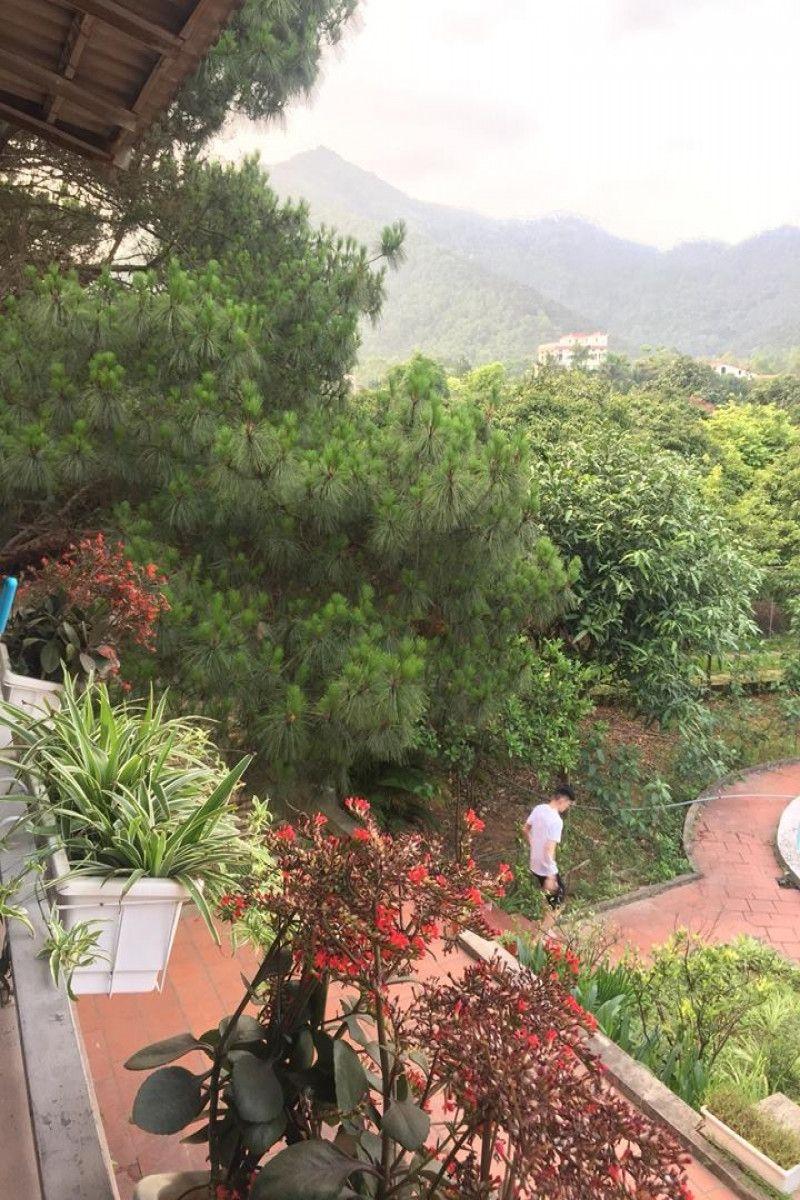 Nghỉ dưỡng tại Bachlien Pine Forest Villa